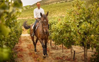Tesalia, un paraiso entre caballos y viñedos
